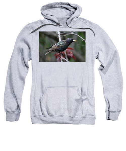 Common Starling Sweatshirt