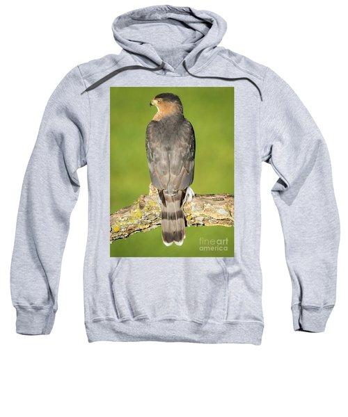 Cooper's Hawk In The Backyard Sweatshirt