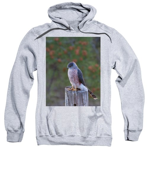 Coopers Hawk Perched Sweatshirt