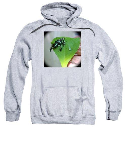 Costa Rican Poison Dart Frog Sweatshirt