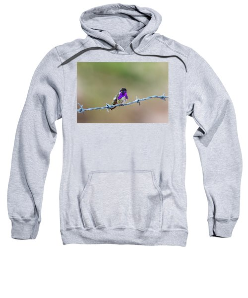 Costa's Hummingbird Sweatshirt