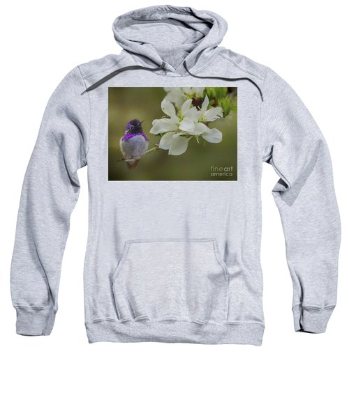Costas Hummingbird On An Anacacho Orchid Branch Sweatshirt