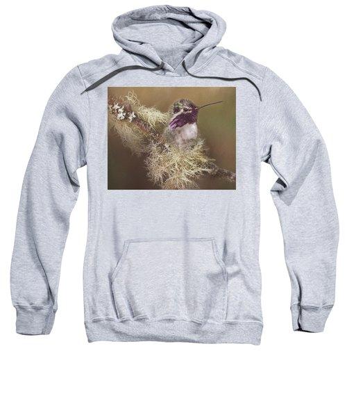 Costas Hummingbird Painted Sweatshirt