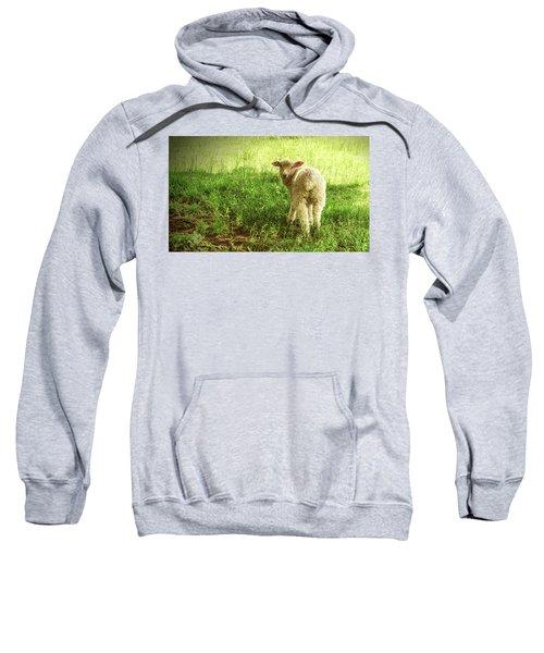 Cotswold Sheep Sweatshirt