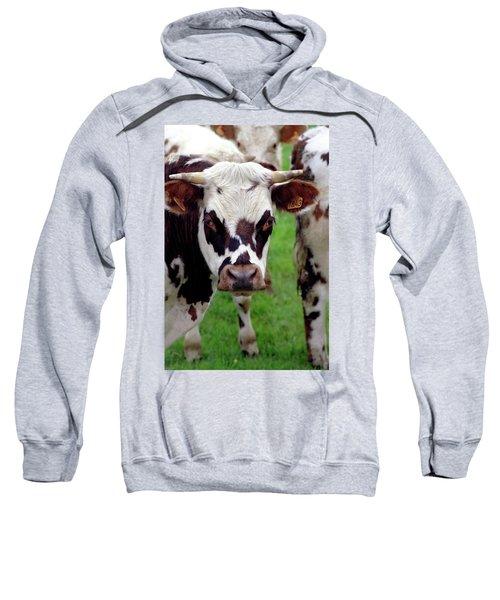 Cow Closeup Sweatshirt
