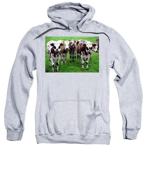 Cow Group Sweatshirt