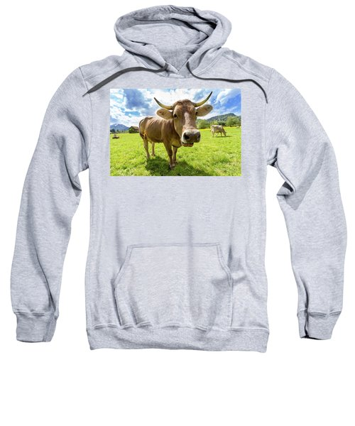 Sweatshirt featuring the photograph Cow In Meadow by MGL Meiklejohn Graphics Licensing