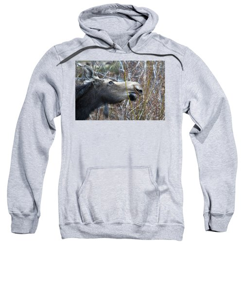 Cow Moose Dining On Willow Sweatshirt