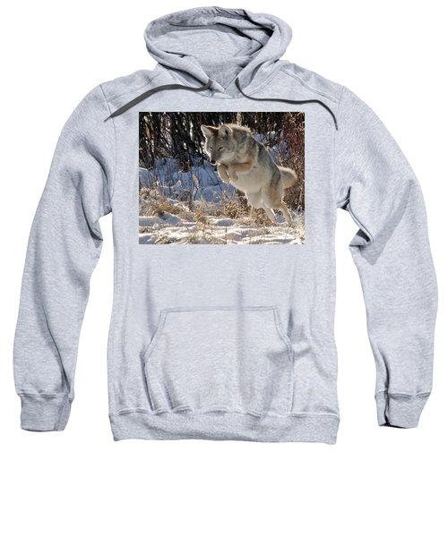 Coyote In Mid Jump Sweatshirt