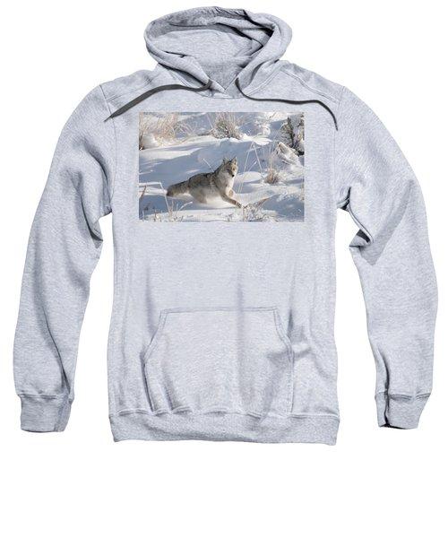 Coyote On The Move Sweatshirt