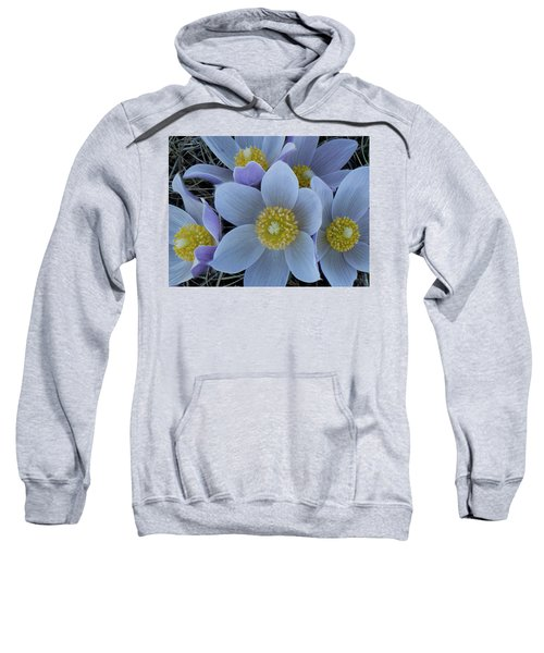 Crocus Blossoms Sweatshirt