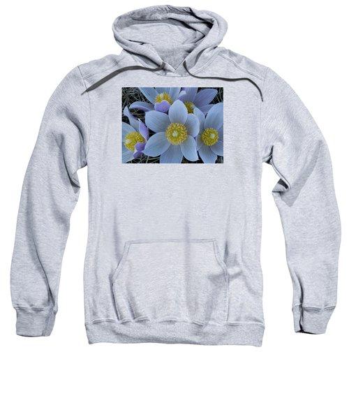 Crocus Blossoms Sweatshirt