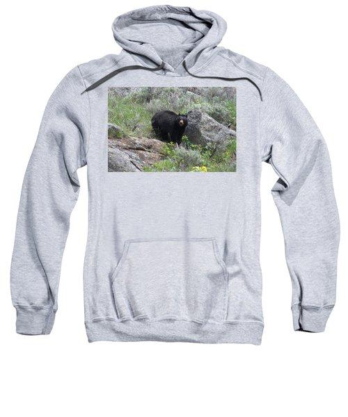 Curious Black Bear Sweatshirt