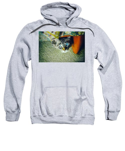 Sweatshirt featuring the photograph Curious Kitty by Silvia Ganora