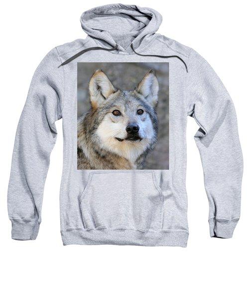 Curious Wolf Sweatshirt