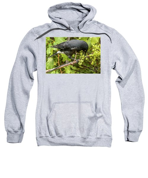 Currawong On A Vine Sweatshirt