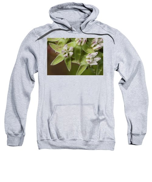 Curtiss' Milkweed #4 Sweatshirt