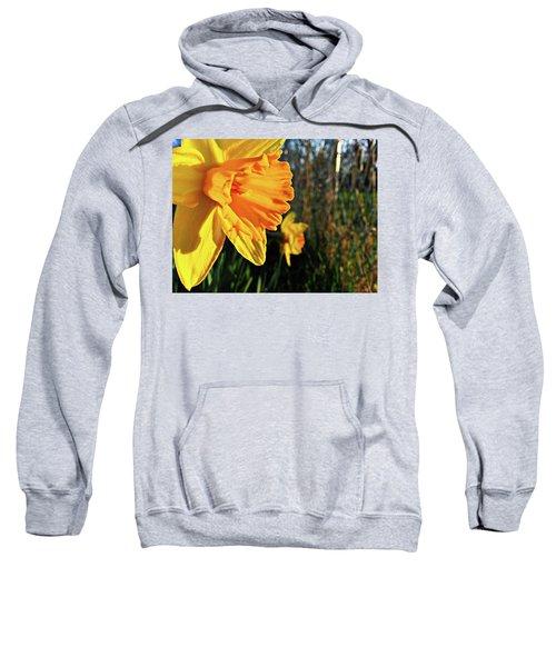 Daffodil Evening Sweatshirt