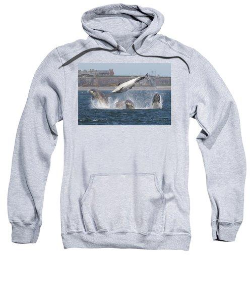 Dance Of The Dolphins Sweatshirt