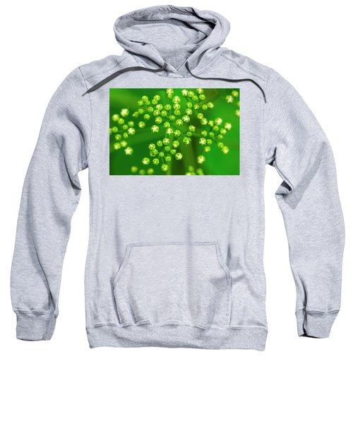 Deliciously Graphic Sweatshirt