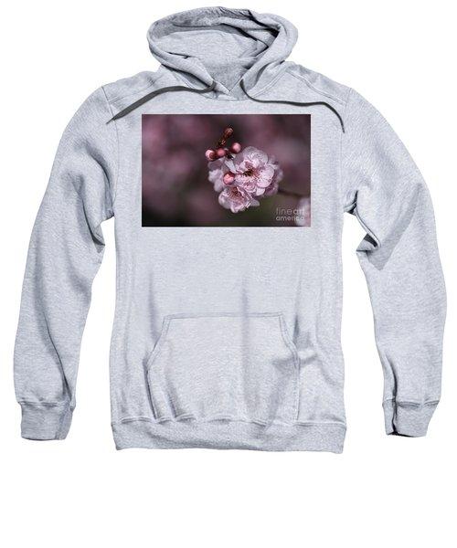 Delightful Pink Prunus Flowers Sweatshirt
