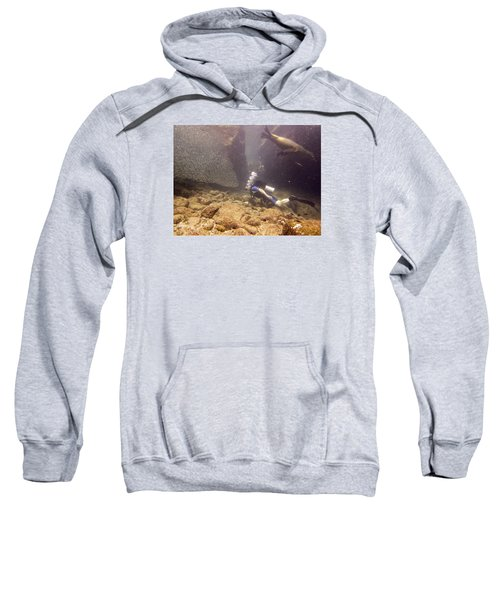 Diver And Sea Lion Sweatshirt