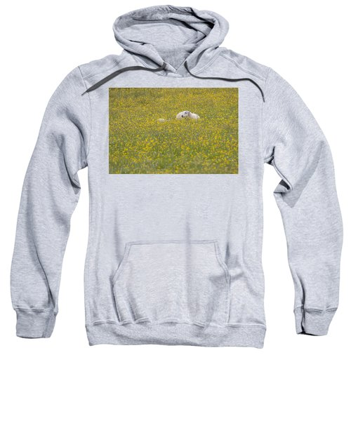Do Ewe Like Buttercups? Sweatshirt
