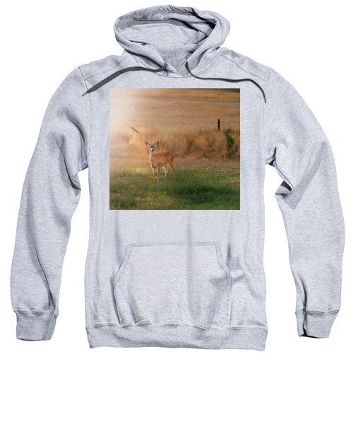 Doe At Sunset Sweatshirt