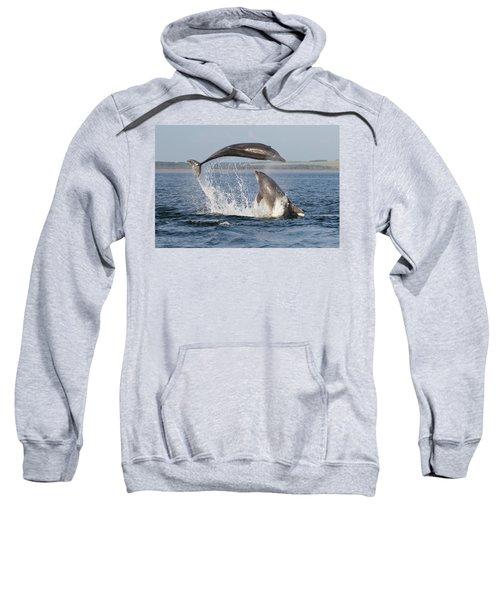 Dolphins Having Fun Sweatshirt