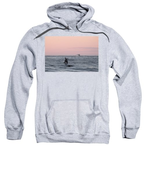 Dolphins At Play Sweatshirt