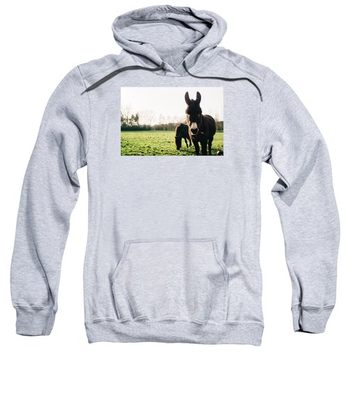 Donkey And Pony Sweatshirt by Pati Photography