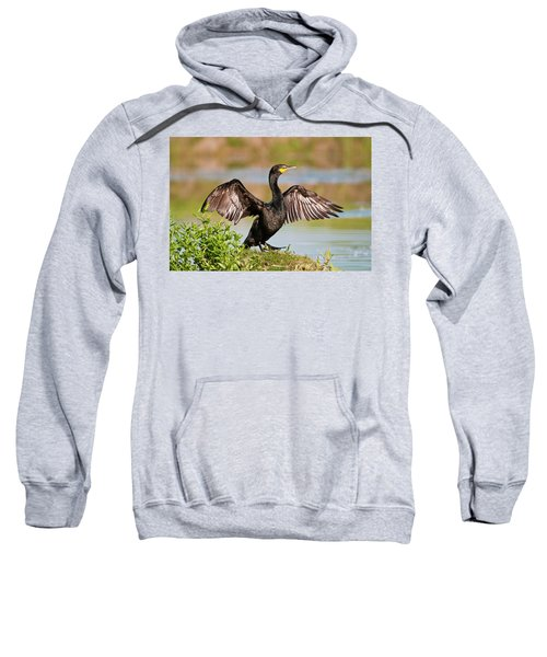 Double-crested Cormorant Sweatshirt by Gary Lengyel