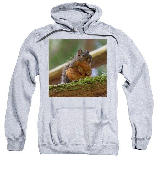 Douglas Squirrel Sweatshirt