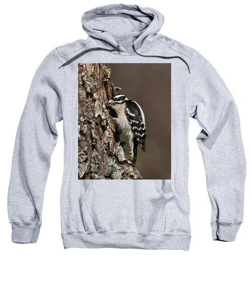 Downy Woodpecker's Secret Stash Sweatshirt