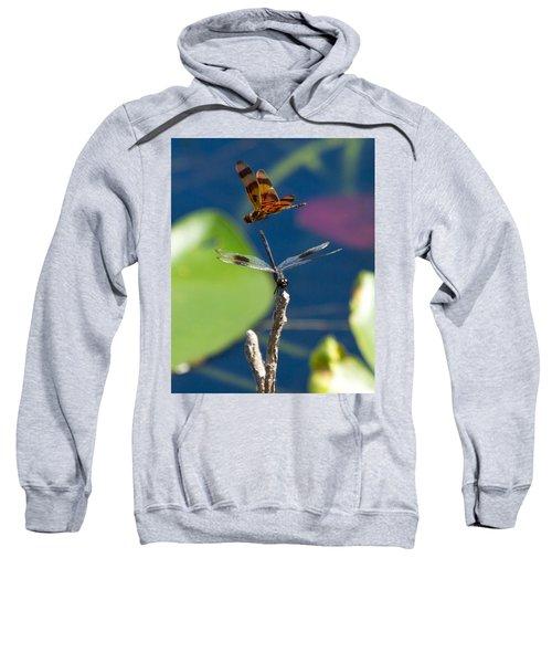 Dragon Fly 195 Sweatshirt