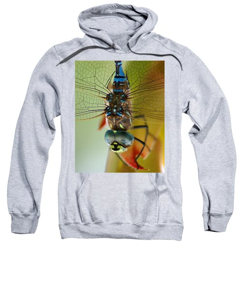 Dragonfly In Thought Sweatshirt