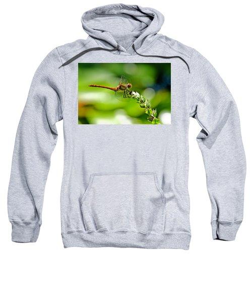 Dragonfly Sitting On Flower Sweatshirt
