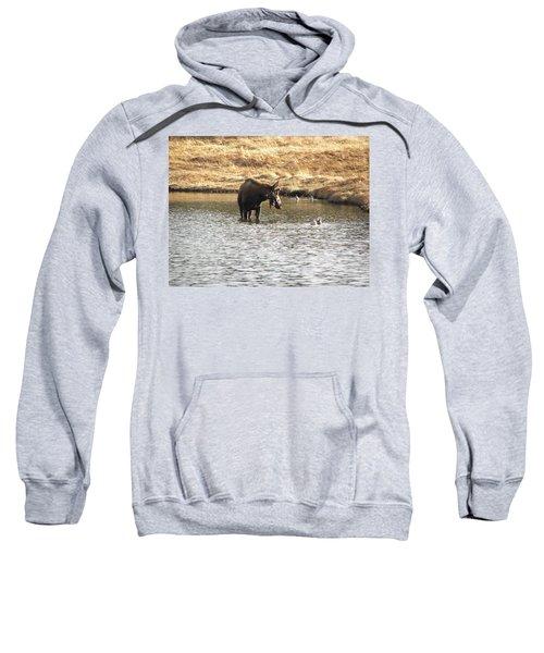 Ducks - Moose Rollinsville Co Sweatshirt