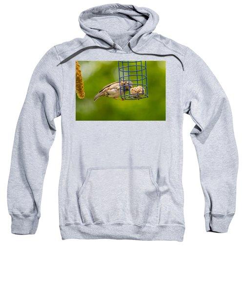 Dunnok Eating Sweatshirt