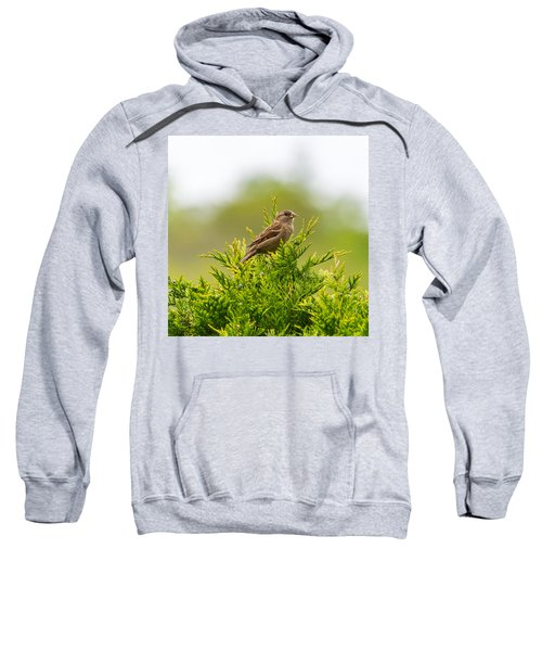 Dunnok Sweatshirt