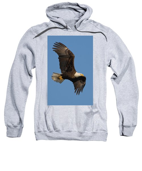 Eagle In Sunlight Sweatshirt