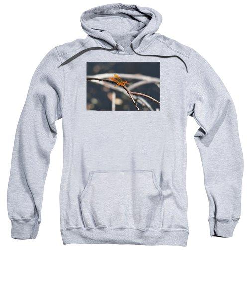 Eastern Amberwing Sweatshirt