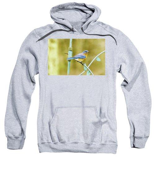 Eastern Bluebird Sweatshirt