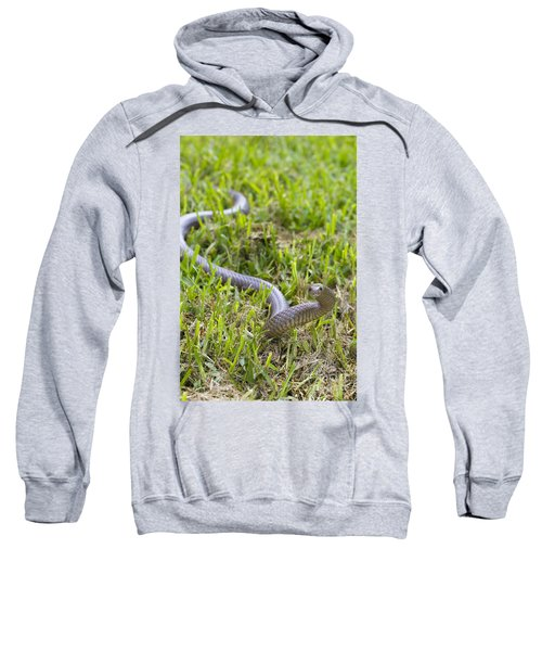 Eastern Brown Snake Sweatshirt