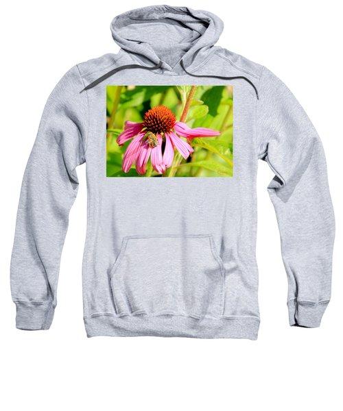 Echinacea Bee Sweatshirt