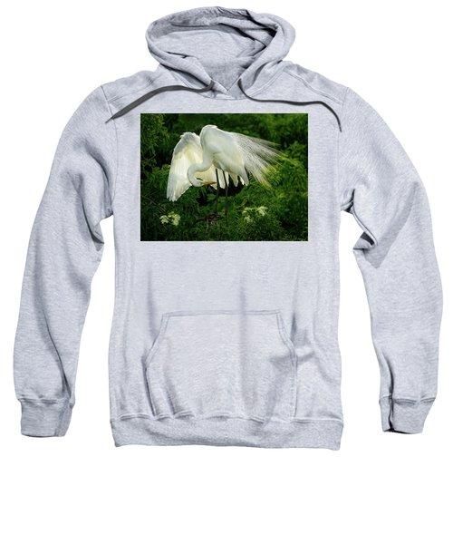 Egret Preening Sweatshirt