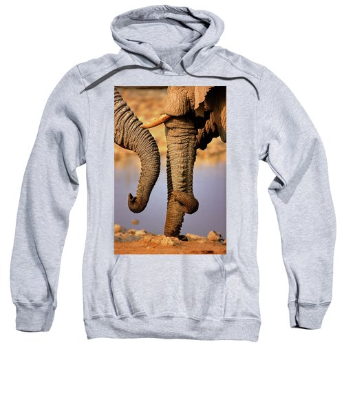 Elephant Trunks Interacting Close-up Sweatshirt