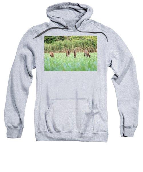 Elk Calves Sweatshirt