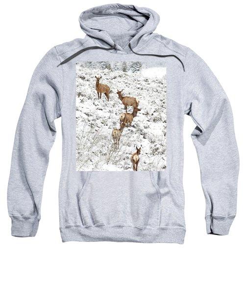 Elk Cows In Snow Sweatshirt