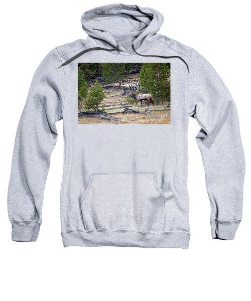 Elk In Yellowstone Sweatshirt